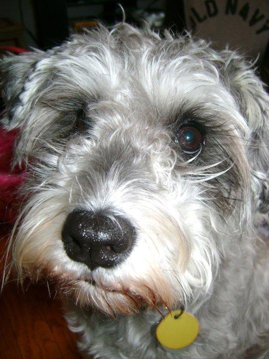 Shaggy The Dog Rescue South Carolina