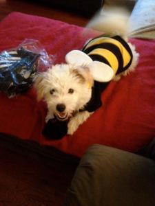 Finny_Halloween 2012