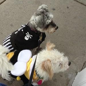 Dogs in Salem
