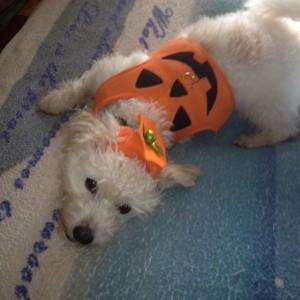 Finny Pumpkin