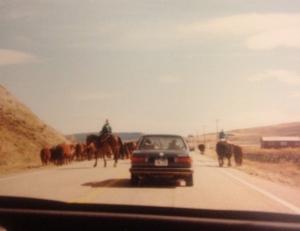 Traffic Jam Wyoming Style