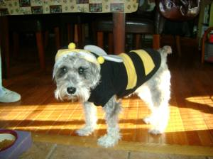 Shaggy as a bumblebee - I don't think this was her favorite costume!