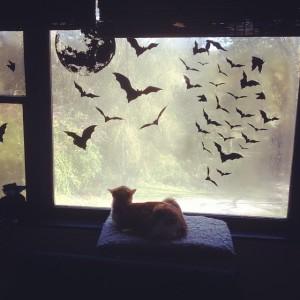 Tweetie and bats