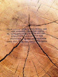 4_-_section_of_the_tree_showing_numerous_growth_rings