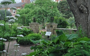 Chelsea garden medicinal plant section