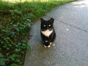 My favorite pet, Ellie-cat