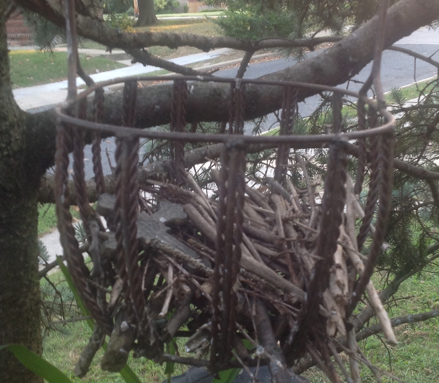 empty nest The grief of empty nest syndrome often goes unrecognised, because an adult child moving out of home is seen as a normal, healthy event.
