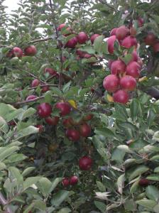 Cold Spring Orchard 10-07 014
