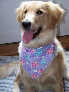 Christine Wenger's dog