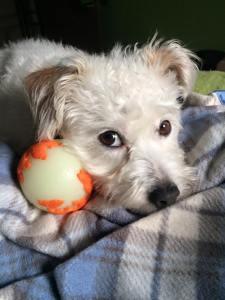 Finny Ball