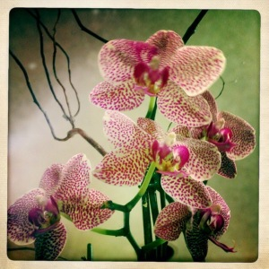 Image 2 - orchid