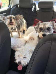 Enjoying a car ride