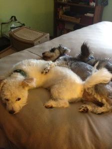 Favorite bedtime position