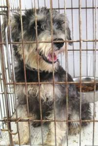 Shaggy's death row photo, 2009