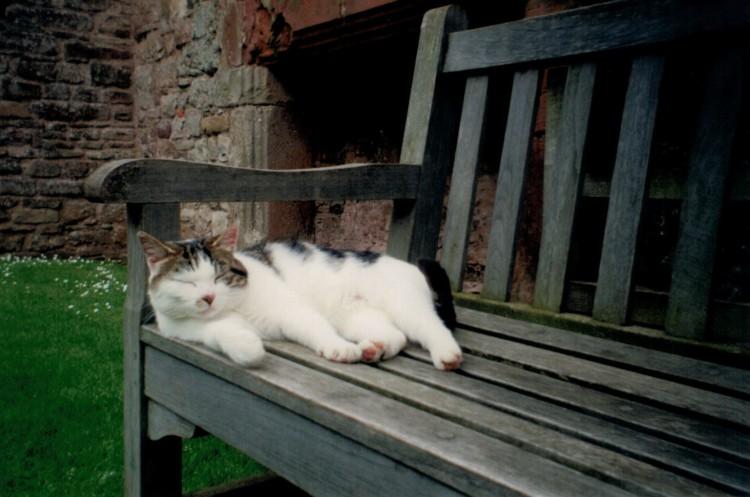 Cat Raglan