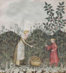 Frau mit Kind in einem Garten bei der Anisernte.