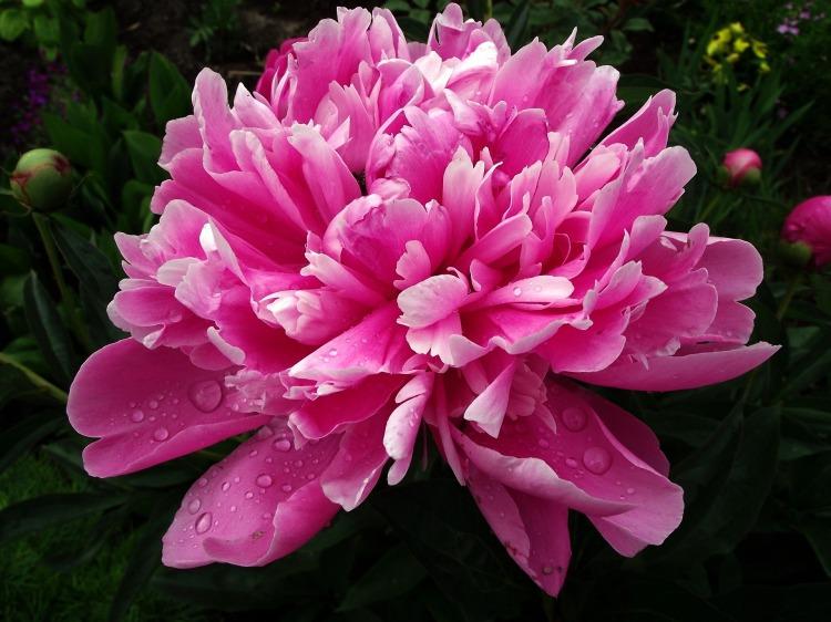 flower-3133556_1920